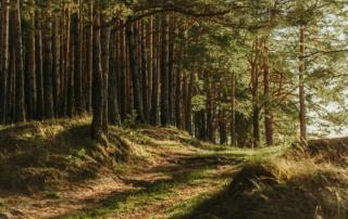 Bilde av tettskog som bader i sollys