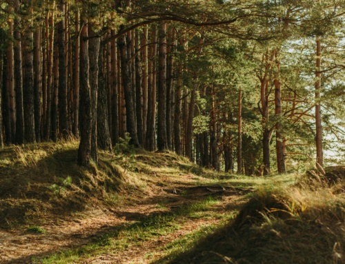 Visste du at europeiske skoger vokser?