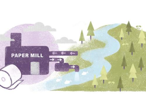 Visste du at nesten alt vannet fra papirindustrien i Europa kommer tilbake til naturen i god kvalitet?